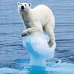 climate bear